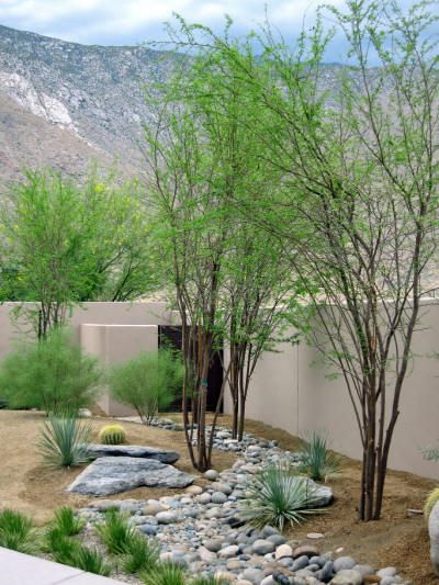 Desert Landscaping With River Rock : Rock lawns are very interesting modern and attractive in