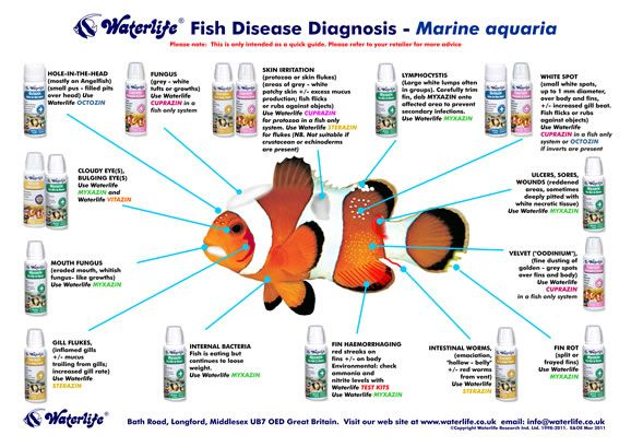 Saltwater fish diseases marine fish disease chart for Freshwater fish parasite identification