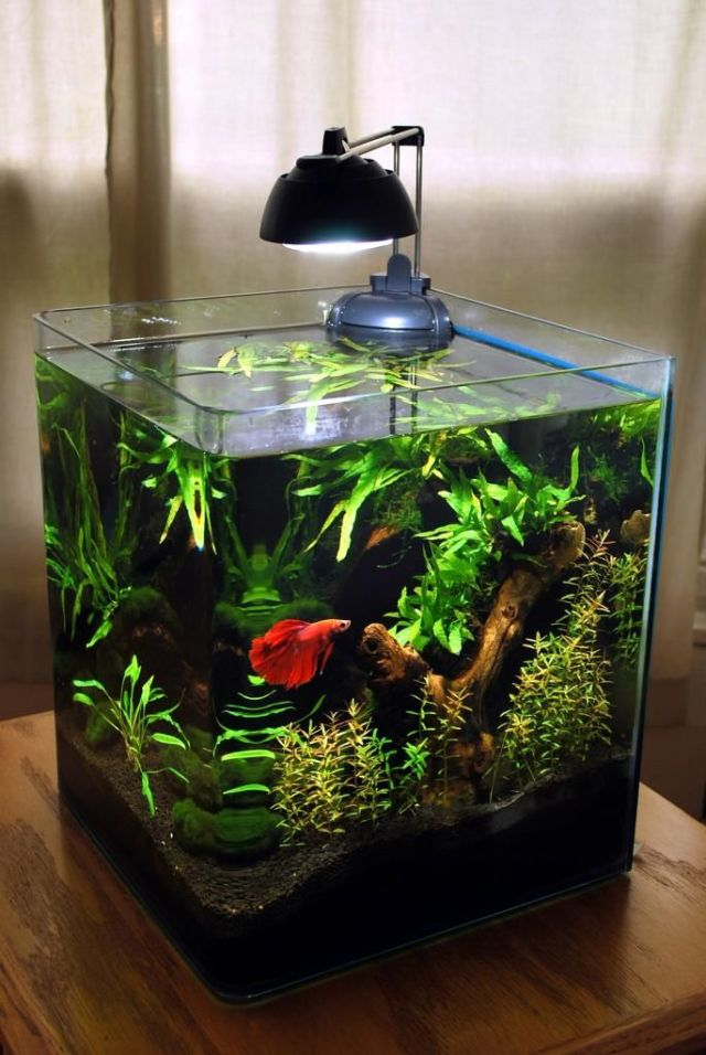 .net   Bettas & Tanks   Pinterest   Betta, Tanks and Rod Stewart