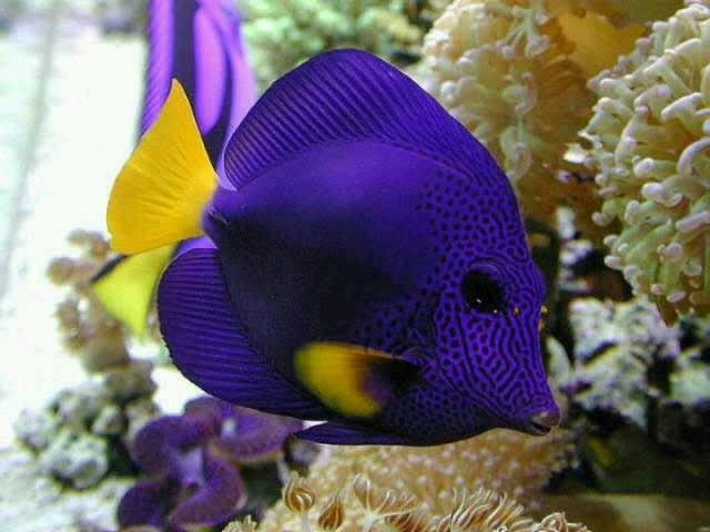 Saltwater Fish: Saltwater Aquarium, Saltwater Fish, Exotic Saltwater