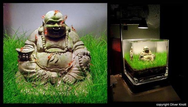 Photo editor online, Photo editor and Buddha on Pinterest