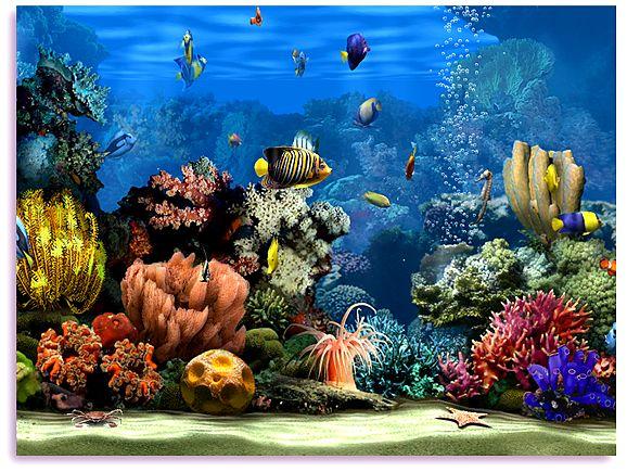 Free 3D Aquarium Screensaver | Operating System (OS): Windows 7, Vista