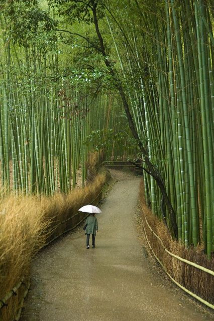 Japan - Arashiyama, Kyoto.  Facts about Japan:  Area: 377,801 sq km.  A 3,000 km arc of four large islands (Honshu, Hokkaido, Shikoku, Kyushu) and 3,000 small islands in NW Pacific. Mountainous; only 13% can be cultivated.  Population: 126,995,411. Capital: Tokyo.  Official language: Japanese.  Languages: 16.: