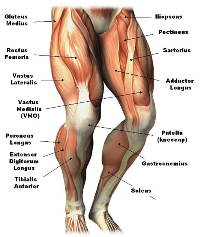 Image result for running muscles legs