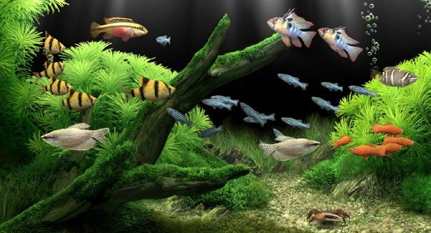 10 Best Freshwater Aquarium Fishes For Beginners   This is pretty
