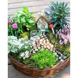 Small Crop Of Fairy Gnome Garden
