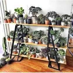 Small Crop Of Indoor Garden Pinterest