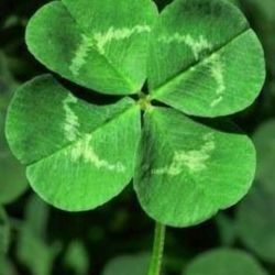 Pin by Ashley Ford on Holidays St Patricks Day Pinterest