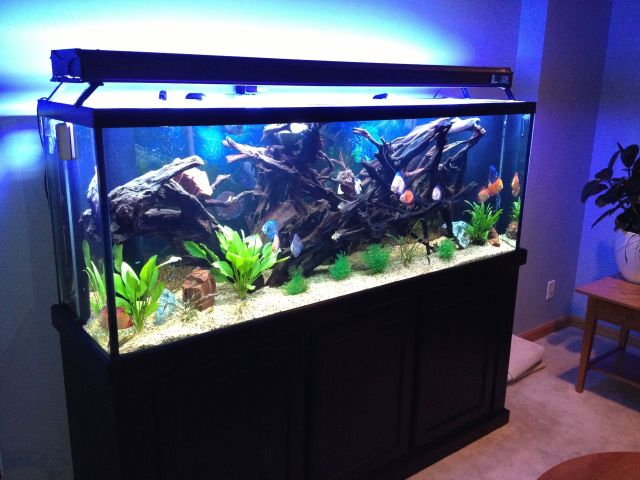 Fish Aquarium 150 Gallon 150 Gallon Display Tank 2017