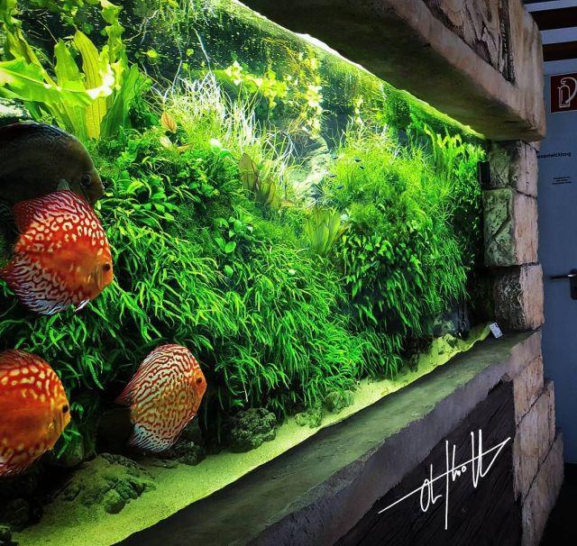 about Aquarium Maintenance on Pinterest | Aquarium, Cichlid Aquarium