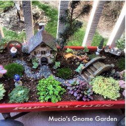 Sophisticated My Fairy Garden Gnome Garden My Fairy Garden Gnome Garden Fairy Gardens Pinterest Gnome Miniature Gnome Garden Ideas