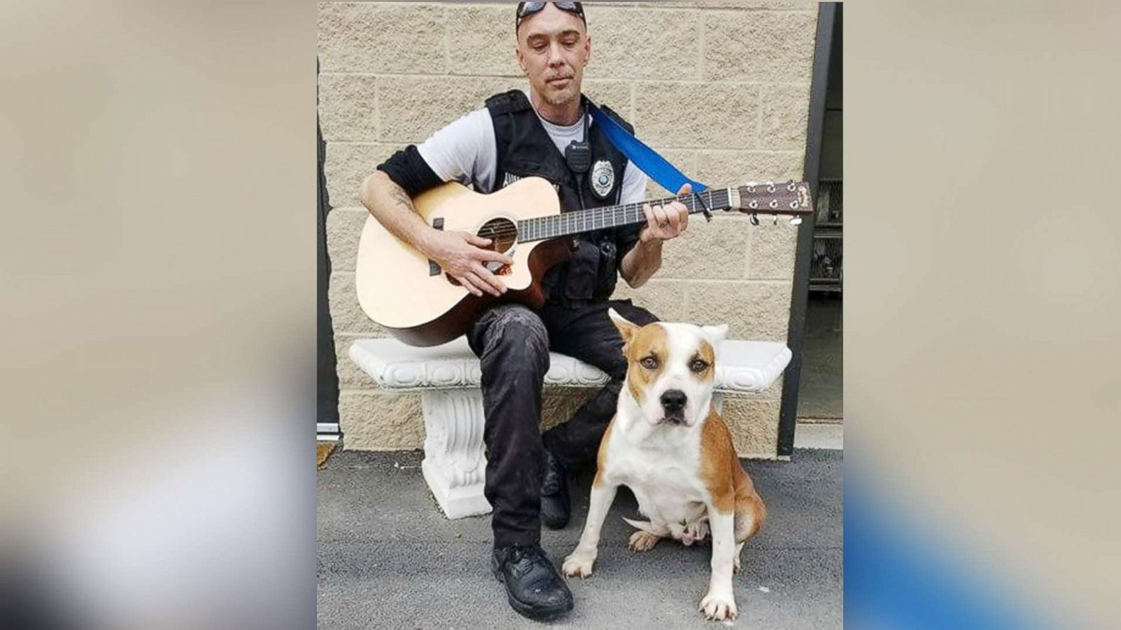 Simple Adoptable Dogs Have Reaction To Animal Control Guitarperformance Abc News Adoptable Dogs Have Reaction To Animal Control Vance County Animal Shelter Facebook Vance County Animal Shelter Music houzz 01 Vance County Animal Shelter