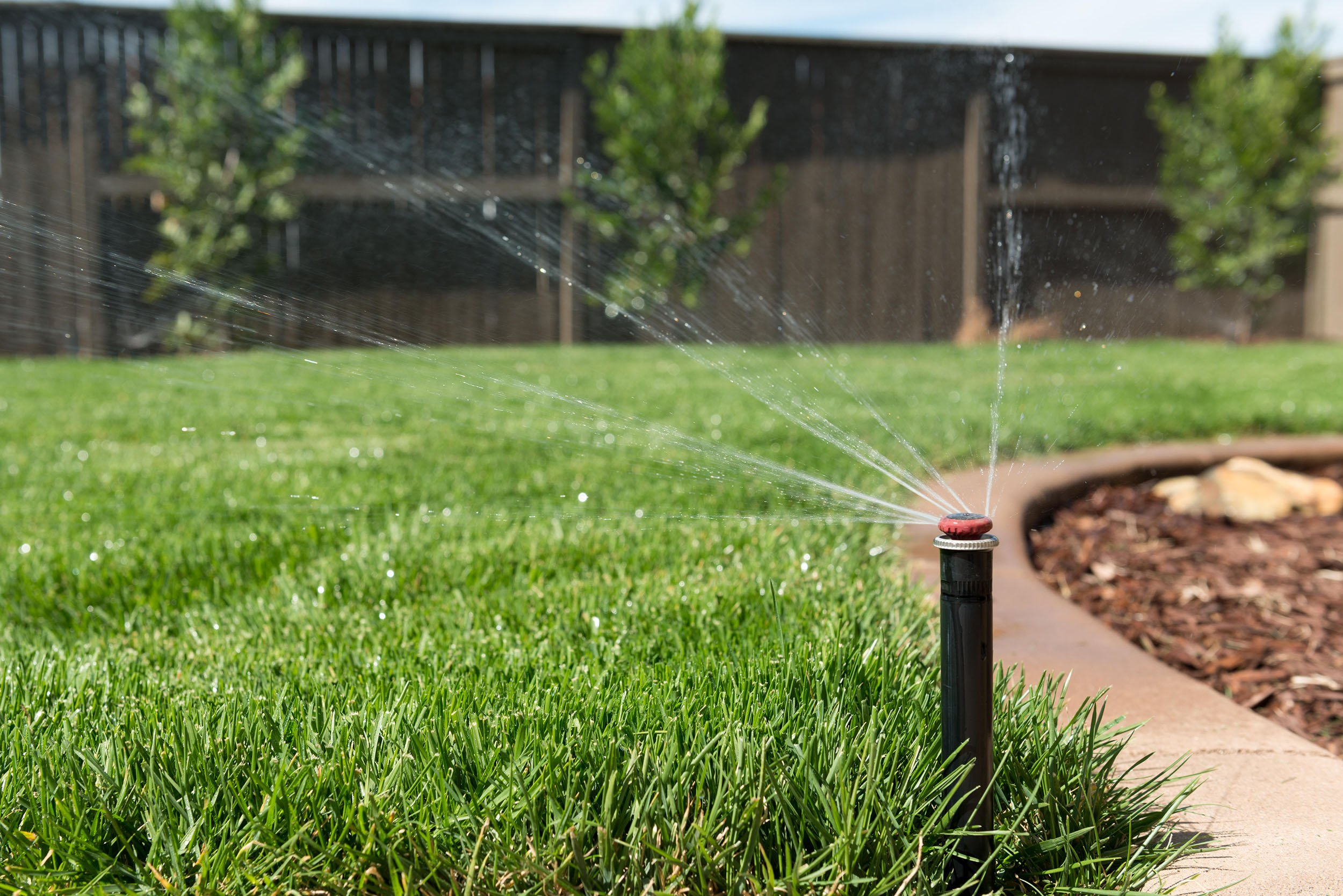 Perky Grass That Need Water Could Keep California Green Fast Growing Grass Seed Lowes Fast Growing Grass Seed Florida houzz 01 Fast Growing Grass Seed