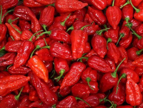 Medium Of Carolina Reaper Pepper For Sale