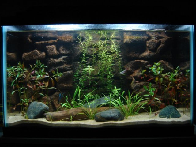 plants can be used in any size fish tank. This is a 10 Gallon tank