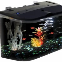 cool fish tanks for betta fish - Unique and Cool Betta Fish Tanks My Dog Ate My Money
