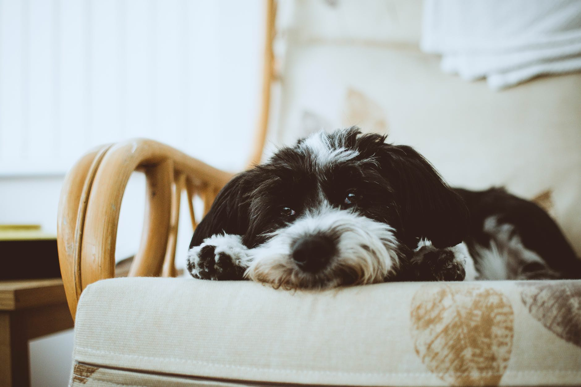 Fullsize Of How Often Should You Bathe A Dog