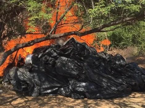 Pés de maconha são incinerados em PE (Foto:  Major André Luiz Cabral Bezerra/ Arquivo pessoal)