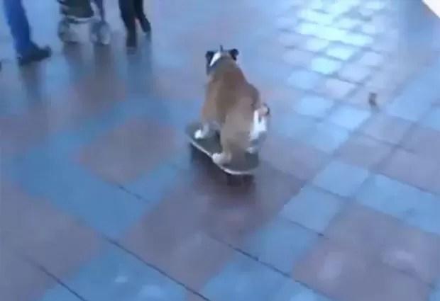 Buldogue faz sucesso ao invadir de skate protesto na Ucrânia