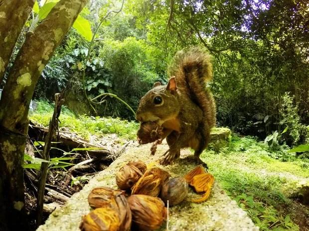 Esquilo e outros pequenos roedores também aparecem no local (Foto: Guilherme Eleuterio / Arquivo Pessoal)