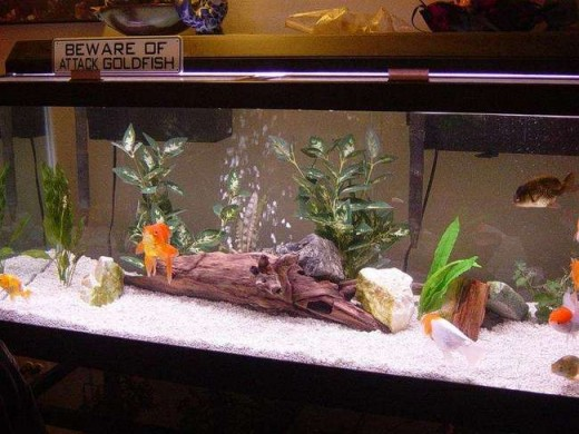 Buy Aquarium Backgrounds Online India 2017 Fish Tank