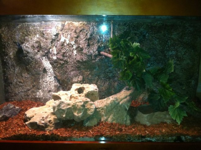 To Make A Realistic 3D Background For Your Aquarium Or Reptile Tank