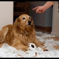 [動画 犬]いたずらして怒られている犬特集