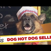 [ドッキリ]ホットドッグ屋さんの店員が犬だったら