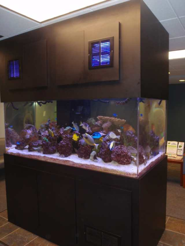 The 300 gallon salt water fish tank in our customer lounge. | Yelp