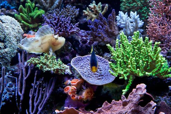 Saltwater aquarium equipment the 1st week assembling for Saltwater fish online