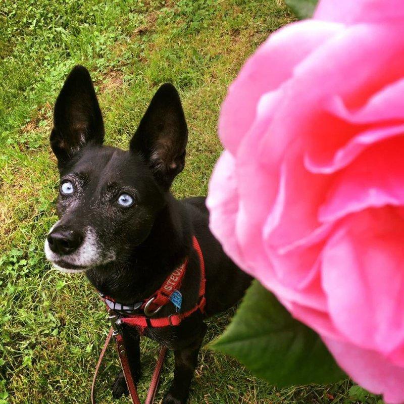 Large Of Seattle Craigslist Pets