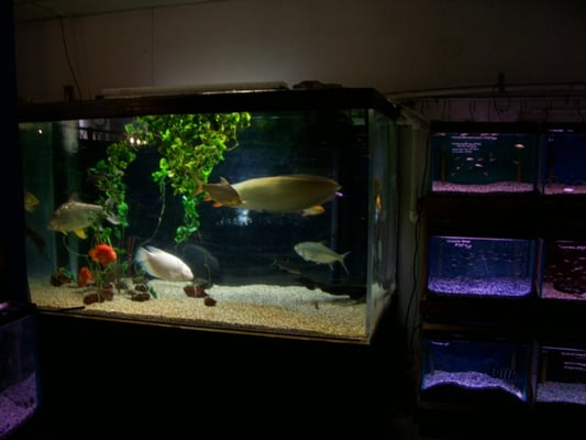 1000 Gallon Fish Tank | Beautiful Scenery Photography