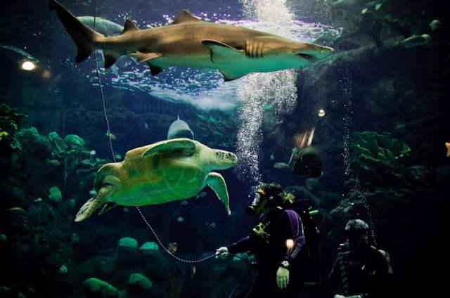 The Florida Aquarium   465 Photos   Aquariums   Channelside   Tampa