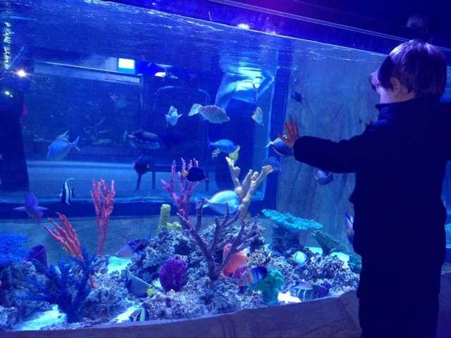 Photos for Portland Aquarium | Yelp