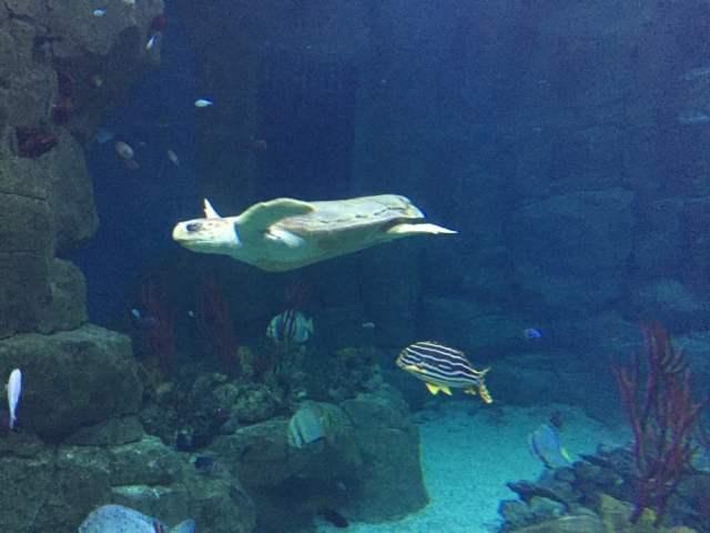 National Marine Aquarium   Aquariums   Plymouth   Yelp