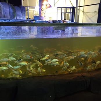 Austin Aquarium   Austin, TX, United States. This needs to be fixed.