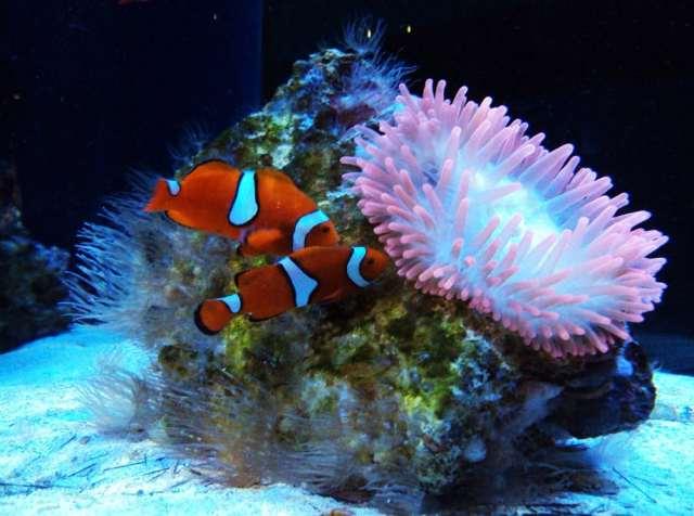 Photos for Newport Aquarium | Yelp