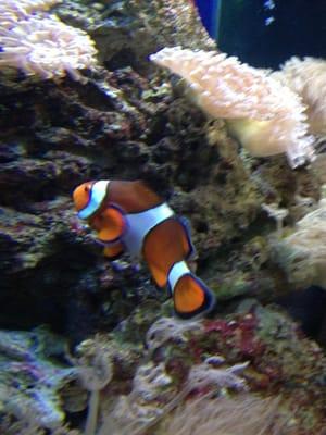 Newport Aquarium   Aquariums   Newport, KY   Yelp
