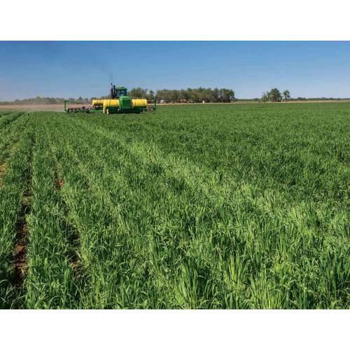 Medium Crop Of Sooner Plant Farm