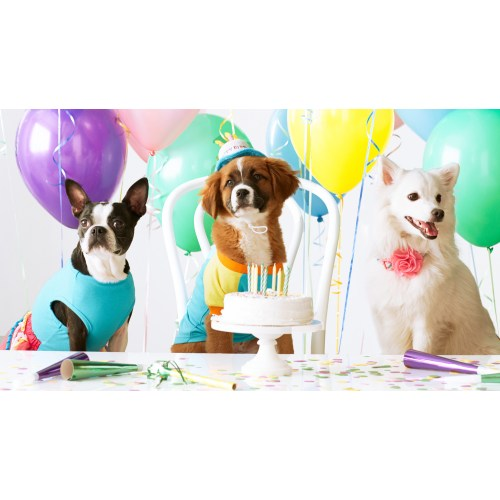 Medium Crop Of Dog Birthday Party