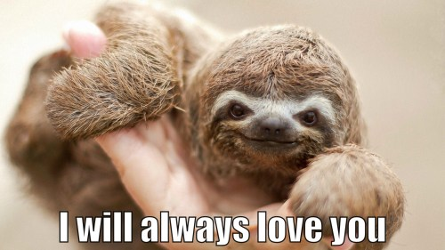 Snazzy Slothlovesyou Hump Day It Slow No Country New Nashville Happy Hump Day Cat Meme Happy Hump Day Work Meme
