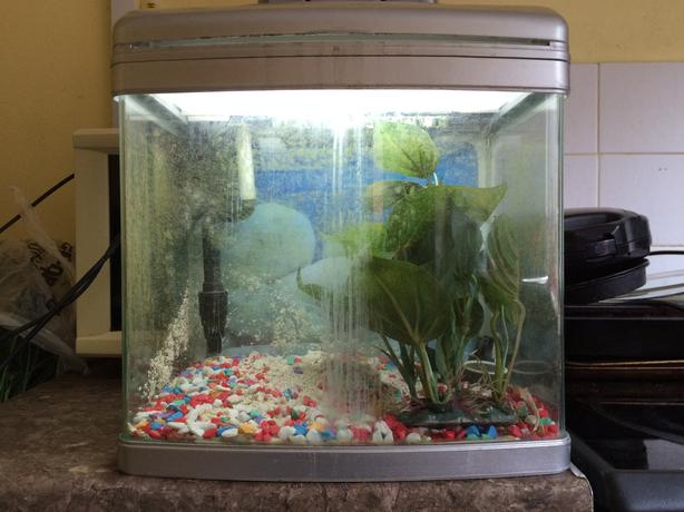 Hi for sale I have a betta fish tank aquarium in good condition with
