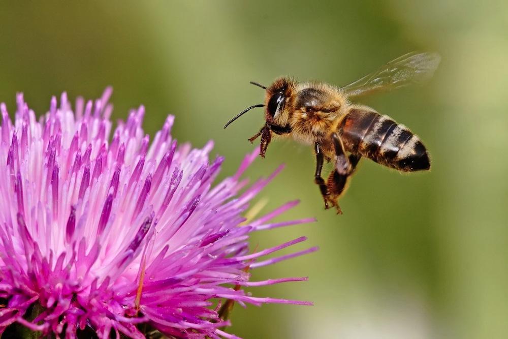 bees in crisis conscious living tv