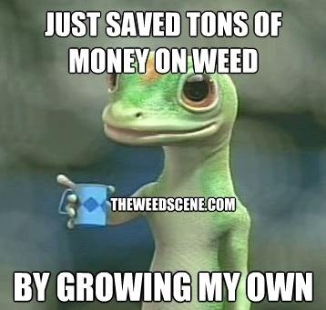 medical marijuana doctor ca