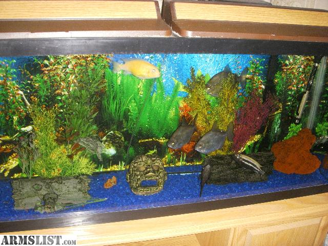 ARMSLIST   For Sale: 55 gallon fish tank with Stand