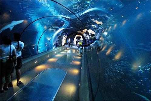Oregon Coast Aquarium in Newport, Oregon
