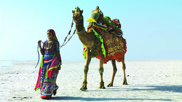 Camel Safari in Rann of Kutch, Gujarat
