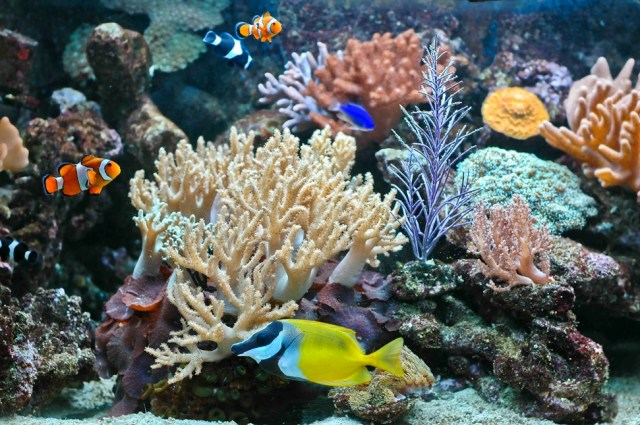 Saltwater Aquarium Plants : saltwater aquarium plants - Saltwater Aquarium Plants Here?s What They ...