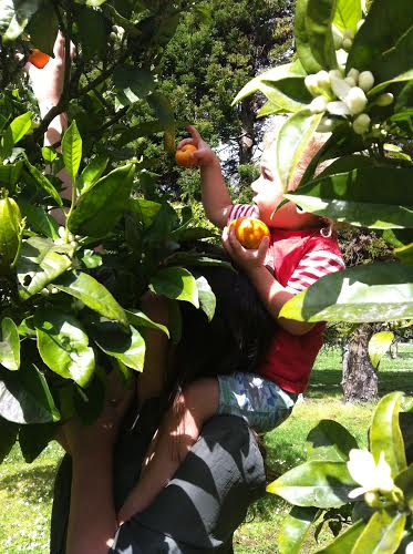 James fruit 1