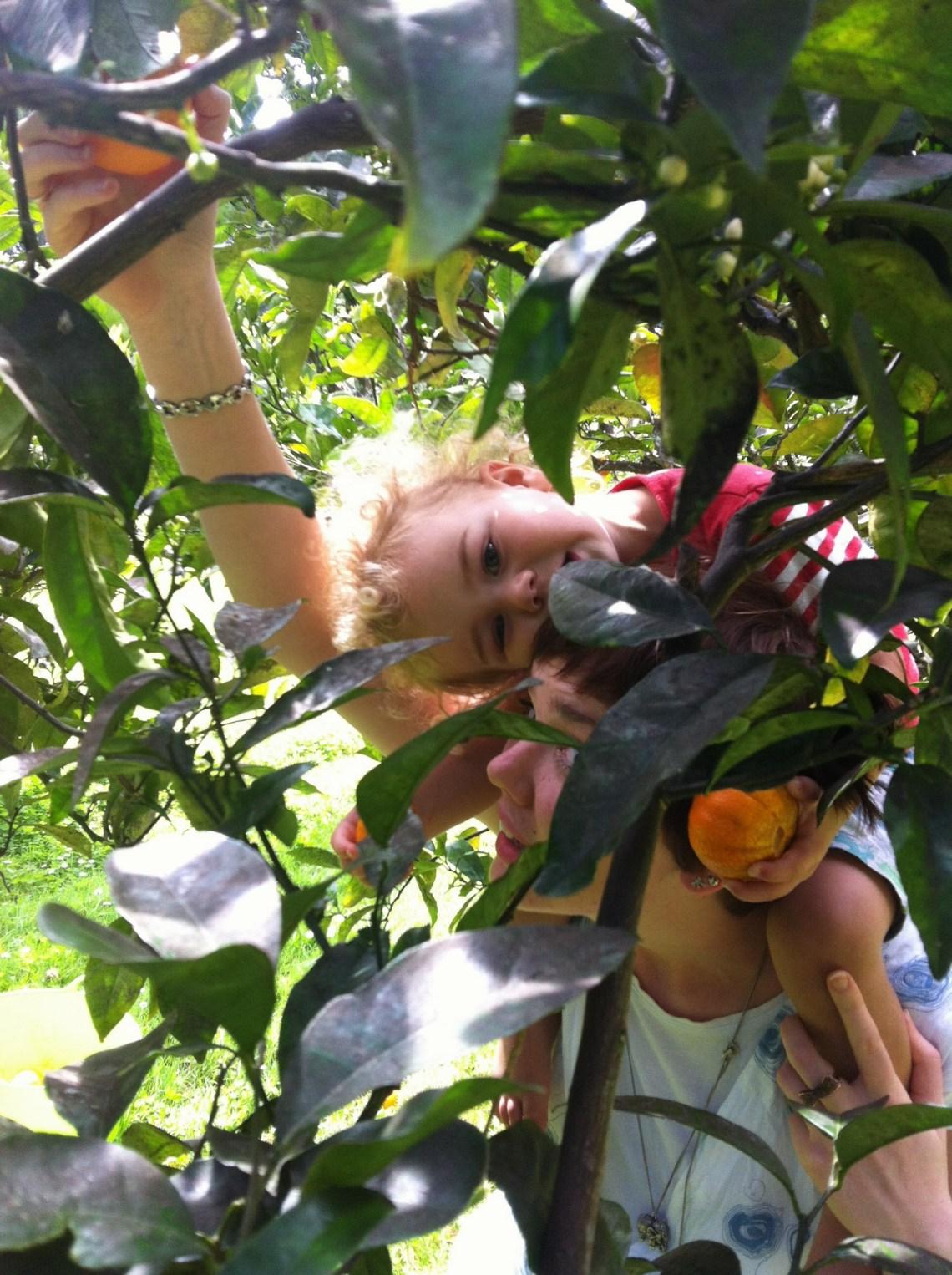 James fruit 2